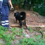 160818_Übung Rettungshundestaffel_025