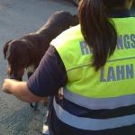 160818_Übung Rettungshundestaffel_029
