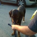 160818_Übung Rettungshundestaffel_030