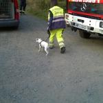 160818_Übung Rettungshundestaffel_032