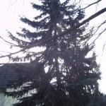 070119_Sturmschäden Kyrill_011