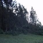 070119_Sturmschäden Kyrill_020