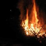 060107_Weihnachtsbäume einsammeln_026