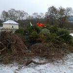 170107_Weihnachtsbäume einsammeln_027