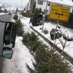 100109_Weihnachtsbäume einsammeln_018