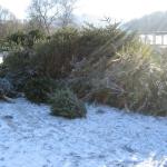 090110_Weihnachtsbäume einsammeln_010