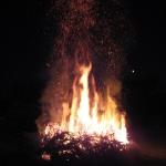 090110_Weihnachtsbäume einsammeln_028